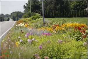 Metro's garden stretches longer than two football fields along County Road 8-1 in Fulton County.