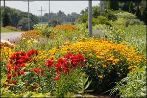 Flowers bloom along County Road 8-1.