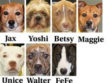 Dogs-for-adoption-8-16