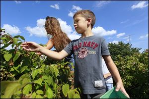 Erica Robinson, left, and Eli Mora, 7, the third and fourth generations in the family that owns Johnston Fruit Farms in Swanton, pick raspberries on their farm. Agricultural experts have noticed the renewed popularity of harvesting one's own produce.