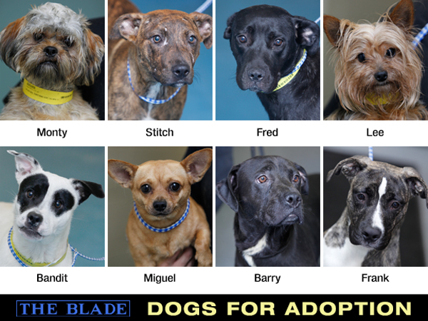 Lucas County Dogs For Adoption 8 20 The Blade