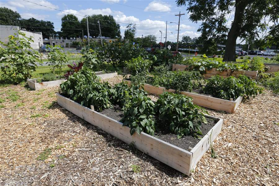 Raised-garden-beds-at-the-TMA