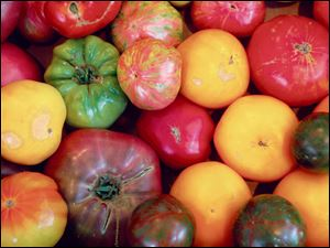 A wide assortment of tomatoes.