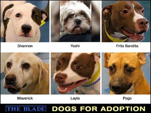 Lucas County Dogs for Adoption: 8/22