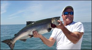 Captain Bob Brown, Jr., caught this king salmon near Pelee island in Lake Erie. Brown estimated the weight at 15 pounds.
