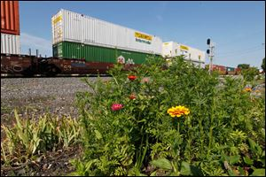 Zinnias and marigolds grow in Bev Newell's train track garden.