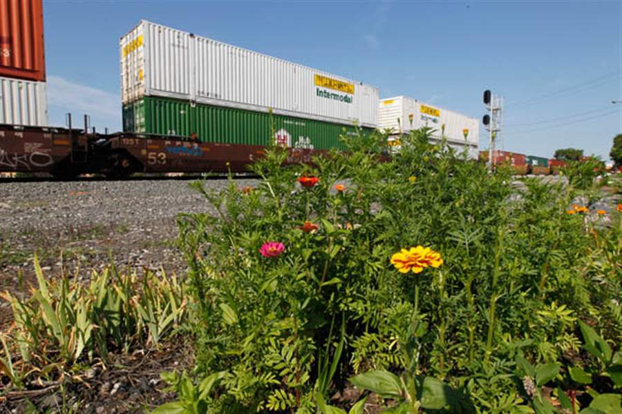 Zinnias-and-marigolds-grow-in-Bev-Newell-s-train-track-garden