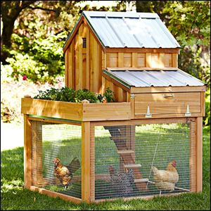 Williams-Sonoma's Cedar Chicken Coop & Run with Planter is an unexpectedly big hit.