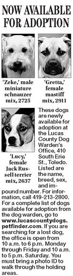 Dogs-for-adoption-9-7