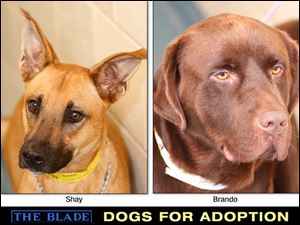 Lucas County Dogs for Adoption: 9/12