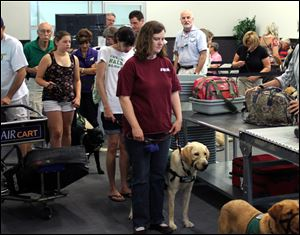 Members and volunteers from Guide Dogs for the Blind, GDB, take a K9 flight class, as they wait in line at a mock TSA screening at the Air Hollywood K9 flight school in Los Angeles.