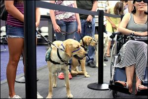 With more dogs racking up air miles these days, it makes sense to take obedience school to a new level, said Heidi Heubner, who directs volunteers, including airport therapy dogs, at Los Angeles World Airport.