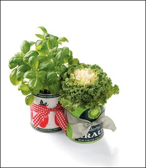 Recycled cans with potted plants.