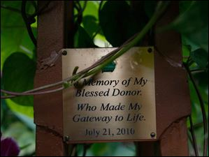 Dedicated to the person who donated their liver to master gardener Bill Alpert.