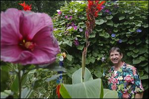 Bill Albert has cultivated an exotic oasis in the backyard of his Waterville home. Left, hibiscus; center, canna. Right: That's Bill!