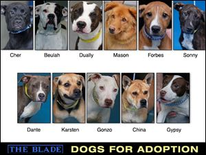 Lucas County Dogs for Adoption: 9/19