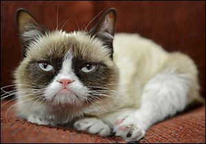 Grumpy Cat's famous face made its debut on the Web site Reddit in September 2012. A YouTube video went viral, catapulting the feline whose real name in Tardar Sauce into other lucrative deals.
