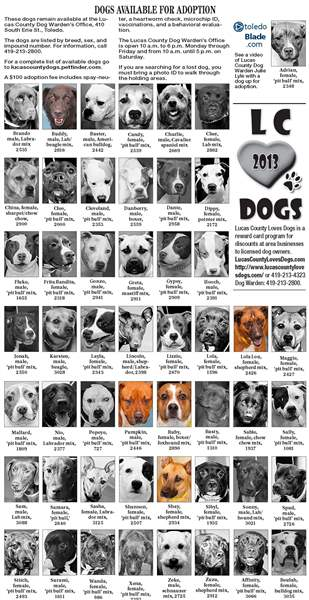 Dogs-for-adoption-Sept-22
