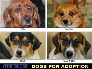 Lucas County Dogs for Adoption: 9-24