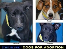 Lucas-County-Dogs-for-Adoption-9-25