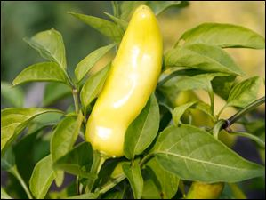 Banana peppers.