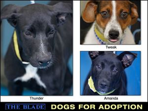 Lucas County Dogs for Adoption: 9-25
