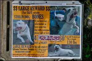 A missing-dog flyer was posted in January after Kathy Sutter reported that the dogo argentino had been stolen from her home in January.