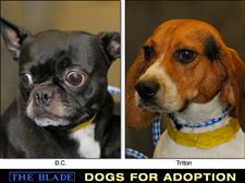 Lucas-County-Dogs-for-Adoption-10-2