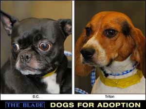 Lucas County Dogs for Adoption: 10-2