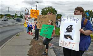 Puppy-protest-Lindsey-Reed