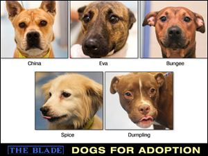 Lucas County Dogs for Adoption: Oct 8