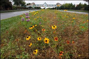 The native plants at the Toledo Zoo Anthony Wayne Trail median in Toledo, Ohio.