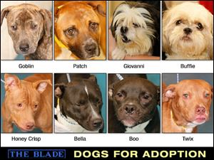 Lucas County Dogs for Adoption: 10-10