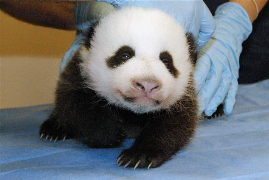 Shutdown-Government-Reopens-Panda