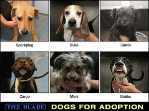 Lucas County Dogs for Adoption: 10-23