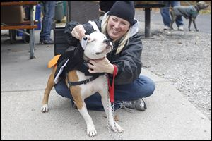 Staci Leupp dresses up Montana before participating in a costume contest Saturday sponsored by the Lucas County Pit Crew at Wildwood Metropark for  National 'Pit Bull' Awareness Day.