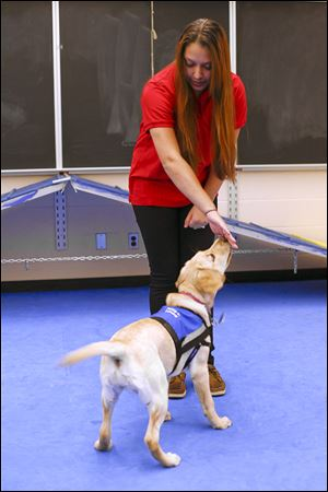 Waite High School senior Mariah Dombrowsky, 18, works with Kinsey, a female yellow Labrador retriever being trained as an assistance dog, at TPS' Natural Science Technology Center.