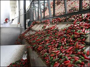 A worker unloads chili peppers for making of Sriracha chili sauce at the Huy Fong Foods factory in Irwindale, Calif. The maker of Sriracha hot sauce is under fire for allegedly fouling the air around its Southern California production site.