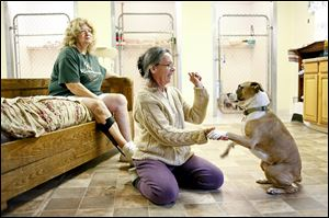 Founder Jane Huth plays with Flo, a 1-year-old female boxer/bea-gle mix, while sitting next to her is partner and neighbor Anne Schumann. You Lucky Dog will close down after nearly 10 years.
