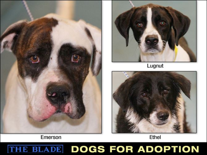 Dogs for Adoption: 11-5