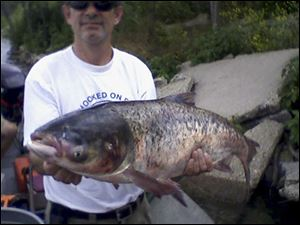 File photo provided by the Illinois Department of Natural resources: 20-pound Asian carp is held after being caught in Lake Calumet, about six miles downstream from Lake Michigan.