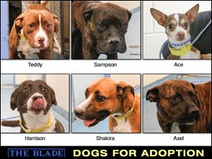 Lucas County Dogs for Adoption: 11-6