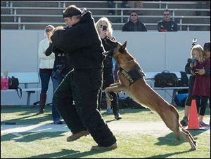 Security dog Sjors takes down a human decoy at the Texas K9 Officers Conference & Trials in Houston.