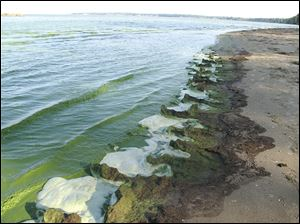 The shores of Lake Erie at East Harbor State Park are covered with the toxic algae which has infested the western basin in recent years. Experts say 2013 was the second worst year for it.