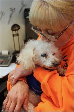 'We'll find her a home,' Nancy Benevento, CEO of Island Safe Harbor Animal Sanctuary, said of a new resident, a 10-year-old miniature poodle named NaNa, who had been living on the streets. NaNa is blind and manages to eat with her two remaining teeth. 'We've had many dogs like this. She'll make it,' Mrs. Benevento said.