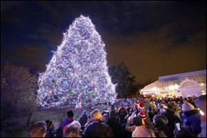 CTY tree16p  Thirty-five thousand lights on an 85-foot Norway Spruce are lit during a ceremony kicking off Lights Before Christmas at the Toledo Zoo, Friday, November 15, 2013.  Masterworks Chorale performed and visitors also met characters from the Ballet Theatre of Toledo's production of the Nutcracker.  The Blade/Andy Morrison