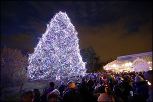 Thirty-five thousand lights on an 85-foot Norway Spruce are lit during a ceremony kicking off Lights Before Christmas at the Toledo Zoo, Friday. Masterworks Chorale performed and visitors also met characters from the Ballet Theatre of Toledo's production of the Nutcracker.