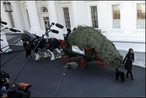 First lady Michelle Obama receives the Official White House Christmas Tree outside the North Portico of the White House.