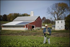 Dennis Hess displays a radish at his farm in Litiz, Pa.