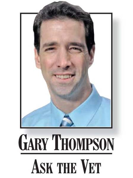ask-the-vet-dr-gary-thompson